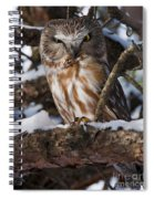 Northern Saw-whet Owl.. Spiral Notebook