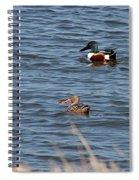 Northern Shoveler Pair Spiral Notebook