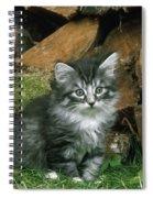 Norwegian Forest Kitten Spiral Notebook