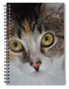 Nosey Lil Kitty Spiral Notebook