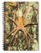 Nursery Web Spider Spiral Notebook