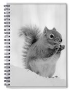 Nuts Over You Spiral Notebook
