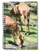 Nyalas At The Watering Hole Spiral Notebook