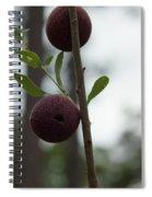 Oak Galls Spiral Notebook