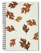 Oak Leaves Art Spiral Notebook