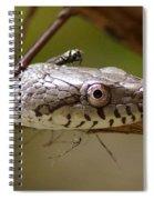 Oak Snake And Fly Spiral Notebook