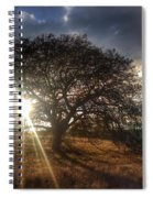 Oak Tree At The Plateau Spiral Notebook