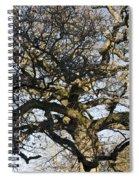 Oak Tree In Winter Spiral Notebook