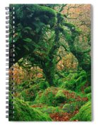Oak Trees In A Forest, Wistmans Wood Spiral Notebook