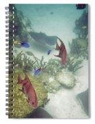 Ocean Bottom Spiral Notebook