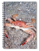 Ocellate Swimming Crab Spiral Notebook