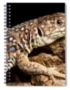 Ocellated Lizard Timon Lepidus Spiral Notebook