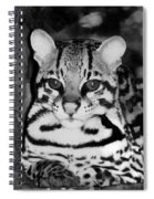 Ocelot In Repose Spiral Notebook