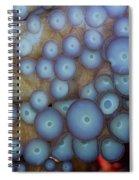 Octo Circles Spiral Notebook