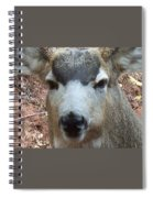 October Deer Iv Spiral Notebook