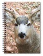 October Deer Spiral Notebook