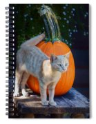 October Kitten #1 Spiral Notebook
