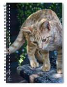 October Kitten #2 Spiral Notebook