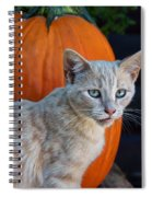 October Kitten #3 Spiral Notebook