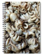 Octopuses Spiral Notebook