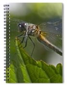 Odonata Spiral Notebook