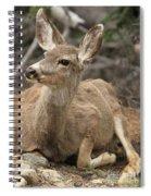 Oh Deer Spiral Notebook
