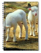 Oh Little Lamb Spiral Notebook