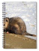 Oh Possum Spiral Notebook