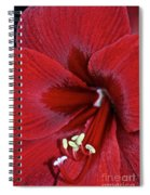 Oh So Red Spiral Notebook