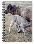 Oil Paint Look Cow And Calf Portrait Usa Spiral Notebook