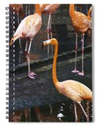 Oil Painting - Focus On A Single Flamingo Inside The Jurong Bird Park Spiral Notebook