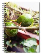 Oil Painting - Lemons Along With Pain Spiral Notebook
