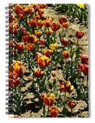 Oil Painting - Red And Yellow Tulips Inside The Tulip Garden In Srinagar Spiral Notebook