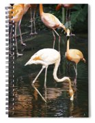 Oil Painting - The Head Of A Flamingo Under Water In The Jurong Bird Park In Singapore Spiral Notebook