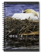 Oil Painting Nesting Swan Michigan Spiral Notebook