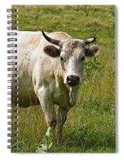 Ol Bossy Spiral Notebook
