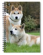 Old And Young Akita Inu Spiral Notebook