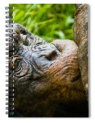 Old Chimp Spiral Notebook