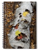 Old Fallen Birch Spiral Notebook