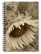 Old Fashioned Sunflower Spiral Notebook