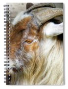 Old Goat Spiral Notebook
