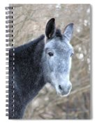 Old Gray Spiral Notebook