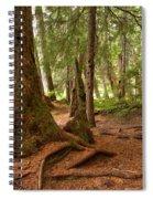 Old Growth Cedar At Cheakamus Lake Spiral Notebook