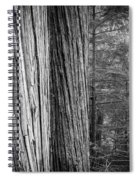Old Growth Cedars Glacier National Park Bw Spiral Notebook