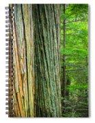 Old Growth Cedars Glacier National Park Spiral Notebook