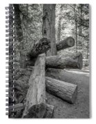 Old Growth Forest Black And White Collection 4 Spiral Notebook