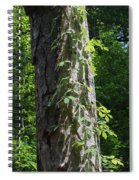 Old Growth  Loblolly Pine - Congaree Swamp Spiral Notebook
