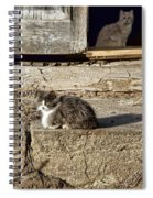 Old Knox Church Cats #2 Spiral Notebook