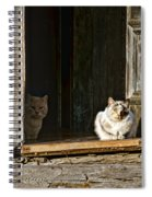 Old Knox Church Cats Spiral Notebook