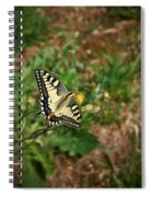 Old World Swallowtail. Montorfano. Cologne Spiral Notebook